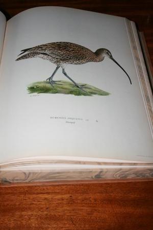 Wrights Fåglar